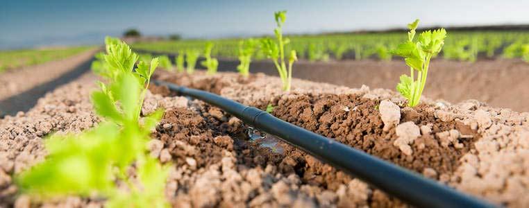 Instaladores de sistemas de riego de m laga for Aspersores para riego de jardin